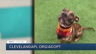 Cleveland APL pet of the weekend: Jenna