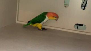 Parrot hilariously pulls off epic 'metal detector' impression