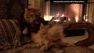 Patient cat poses for picture in Christmas pajamas