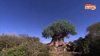 Walt Disney World Celebrates Earth Day | Morning Blend