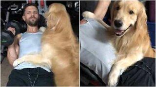 Bestevenner! Denne lojale hunden vil ikke la eieren være alene, ikke engang på treningsstudioet!
