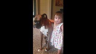 Baby girl gives her boxer a loving hug