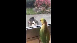 Parrot teases cat