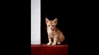 amazing And cute Animals