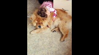 Sweet little girl loves to hug her gentle giant doggy