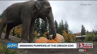 Elephant Pumpkin Smashing