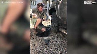 Serpente nascosto nella ruota dell'auto