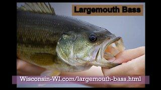 Wisconsin Largemouth Bass Kiss Underwater Camera VIDEO - Landman Realty LLC