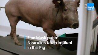 Elon Musk demonstrates Neuralink working on a pig's brain
