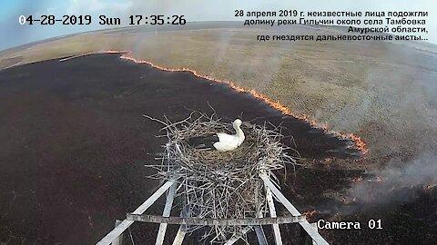 Time lapse captures stork's nest overlooking massive fire