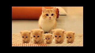 Little cutie kittens