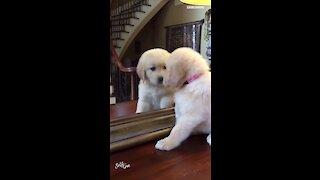 Puppy finds her best friend in the mirror