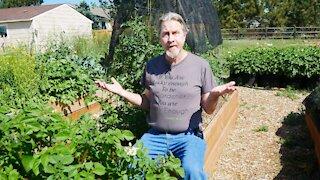Gardening During Drought