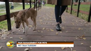 PET TALK TUESDAY - PAIN MANAGEMENT AND PETS
