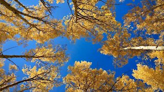 Colorado Fall Color 2020