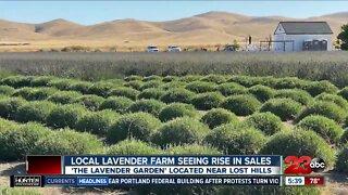 Local lavender farm sees surge in sales