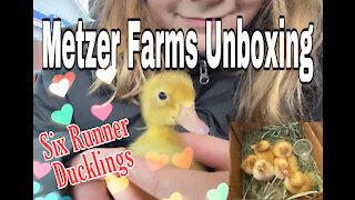 Metzer Farms Ducklings