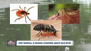 WNY rainfall is raising concerns about bug bites