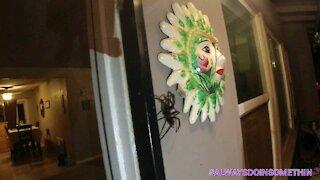 Tarantula at front door