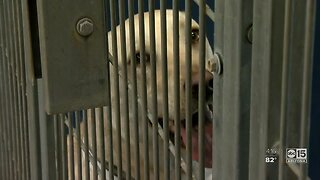 County animal shelter changing operations due to COVID -19