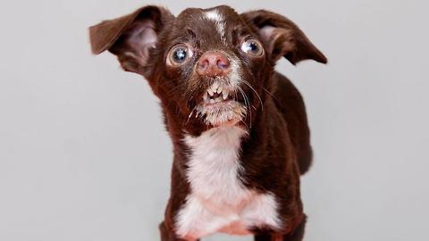 Unique Tiny Rescue Dog Finds Fur-Ever Home