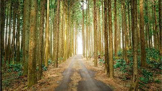 How Japanese forest bathing can improve your health