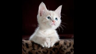 Cute and Funny pets 2020