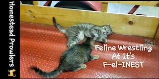 UFC Feline Division Championship Fight!