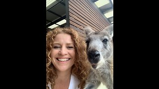 Smart kangaroo breaks into home