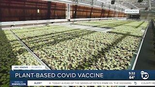 In-depth: plant-based COVID vaccine