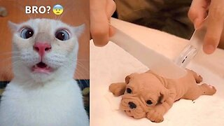 Some Hilarious Pets, Just Make Your Day Better