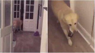 Hund gir eieren sin en sider