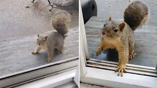 Friendly squirrel politely takes walnut from human's hand