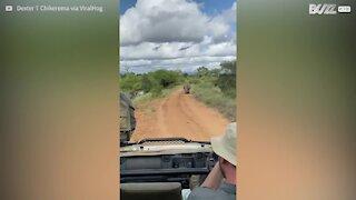 Un rhinocéros pourchasse un groupe de touristes