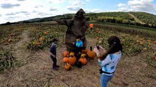 Pumpkin Picking at Donaldson Farms