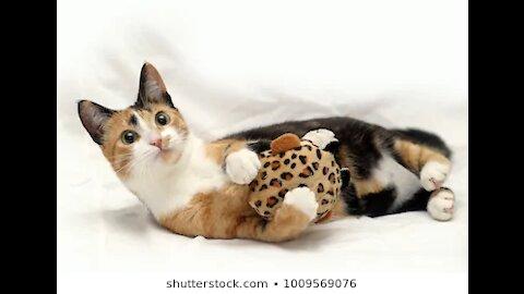 Funny cats, cat birthday