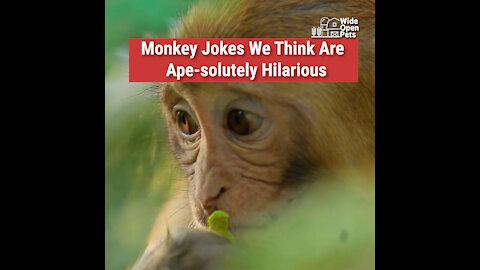 Monkey Jokes We Think Are Ape-solutely Hilarious