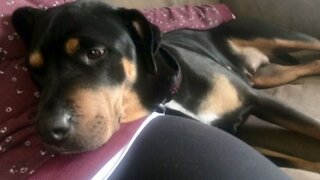 Ontario Woman Is 'Heartbroken' After 'Loving' 10-Year-Old Dog Dies From Police Shooting