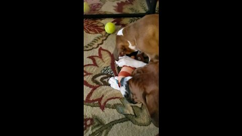 When I was Smol. Cute puppy video