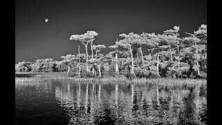 Infrared Photography Processing Tutorial