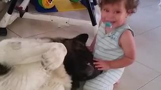 This Affectionate Akita Shares Precious Hugs With Baby