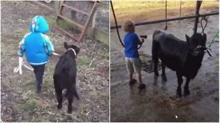 This farmer's son is best friends with a calf!