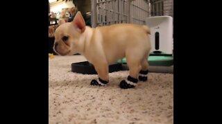 Too much puppy cuteness
