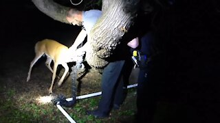Police and Wildlife Officials Rescue Baby Deer From Net
