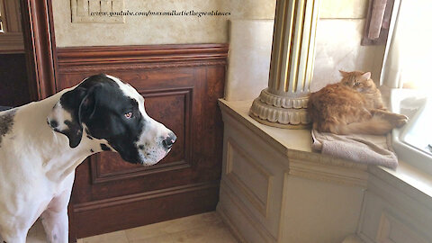 Cats & Great Danes hilariously demonstrate social distancing