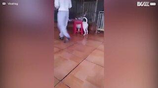 Cane rimane intrappolato nello sgabello