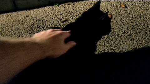Stray Orange & Black Cats Approach Me To Get Petted in Tokyo