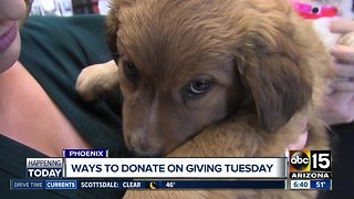 One way to help animals on Giving Tuesday
