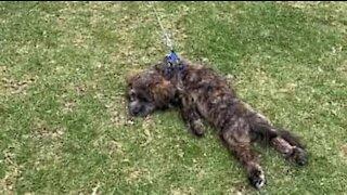 Sulking dog refuses to leave park
