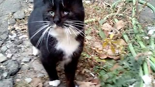 Playful cat rat-trap